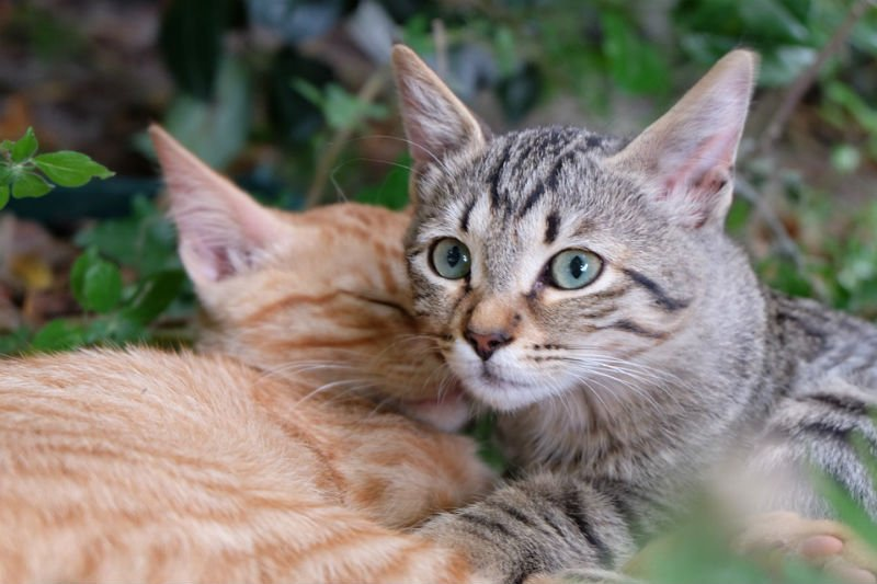 Cancer-killing virus tried in pet cats moves to human trials