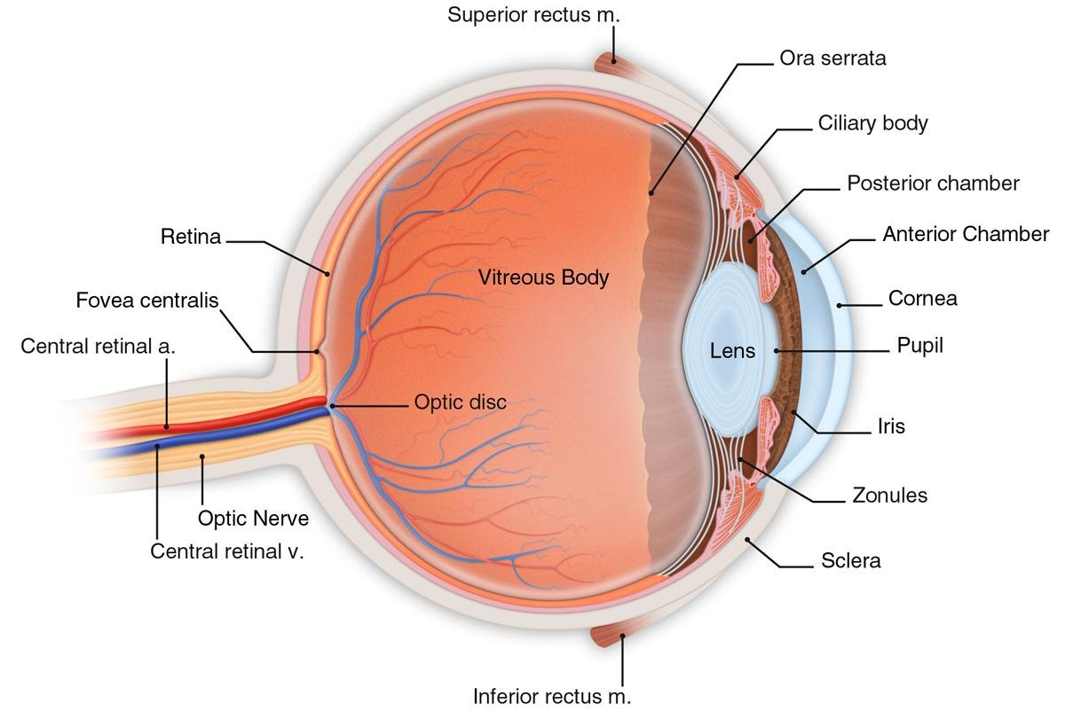 Eye diagram left auto wiring diagram today computer aided method could lead to early diabetic retinopathy rh fiercebiotech com eye diagram for makeup eye diagram electronics ccuart Images