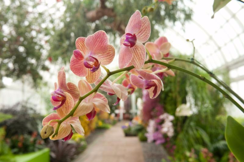 The Orchid Show Thailand At The New York Botanical Garden