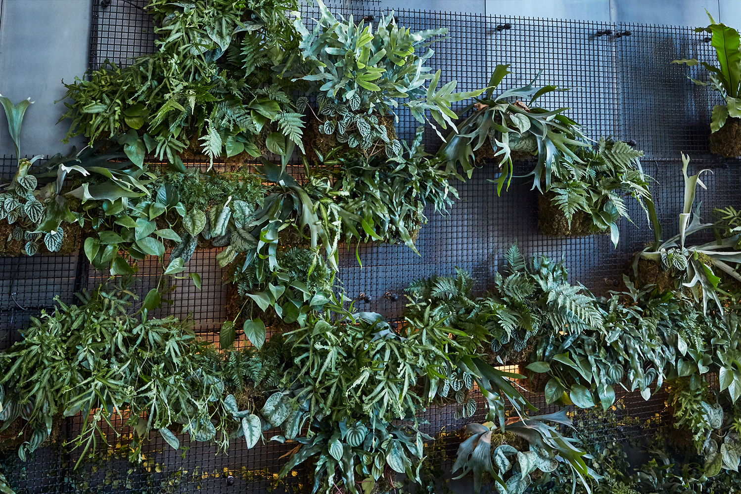 Harrison Green developed the initial greenwall concept with AgroSci, which manufactures and installs exterior and interior living walls.