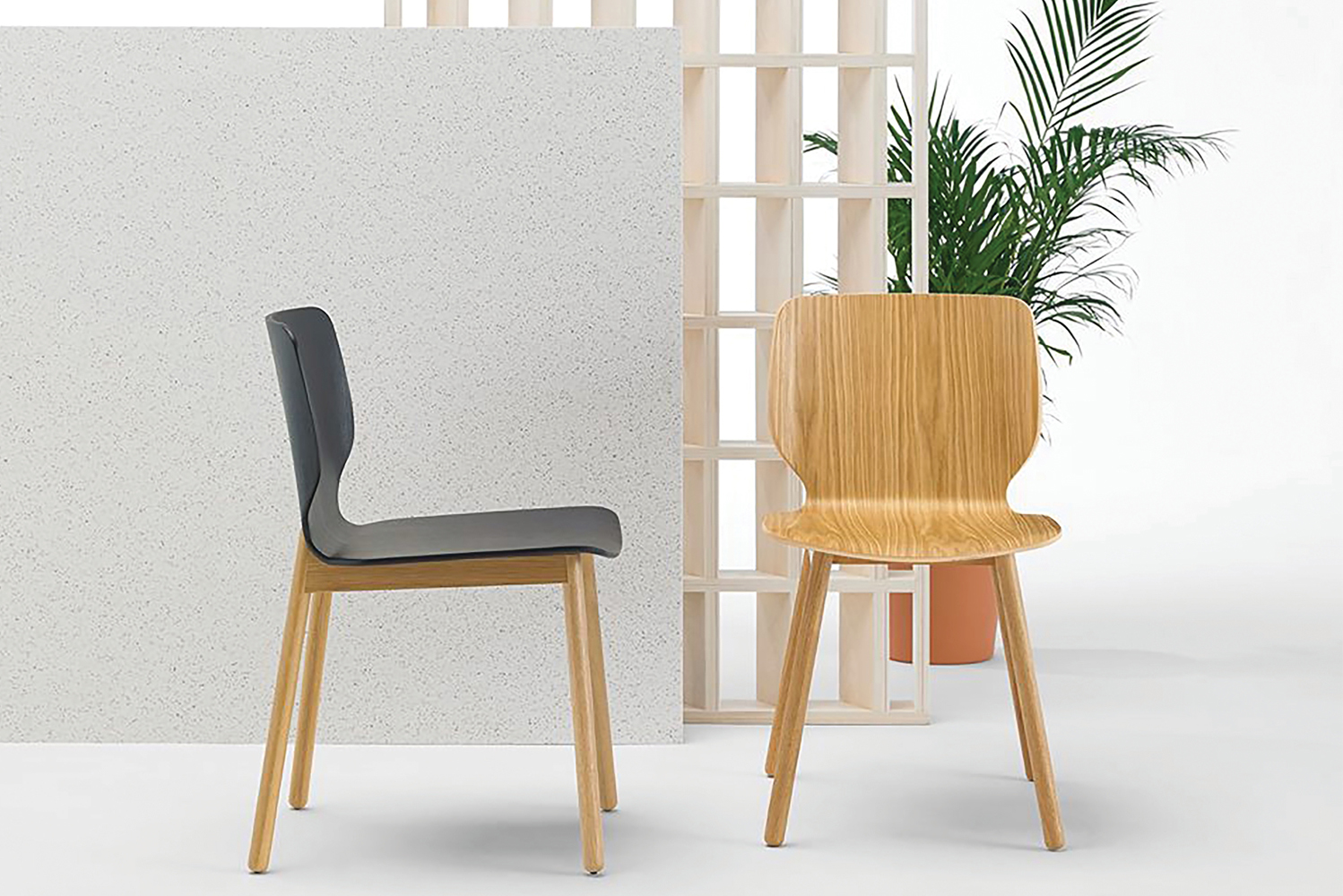 Introducing Nim, a collection of chairs combining crafted wood with contrast-stitched upholstery.