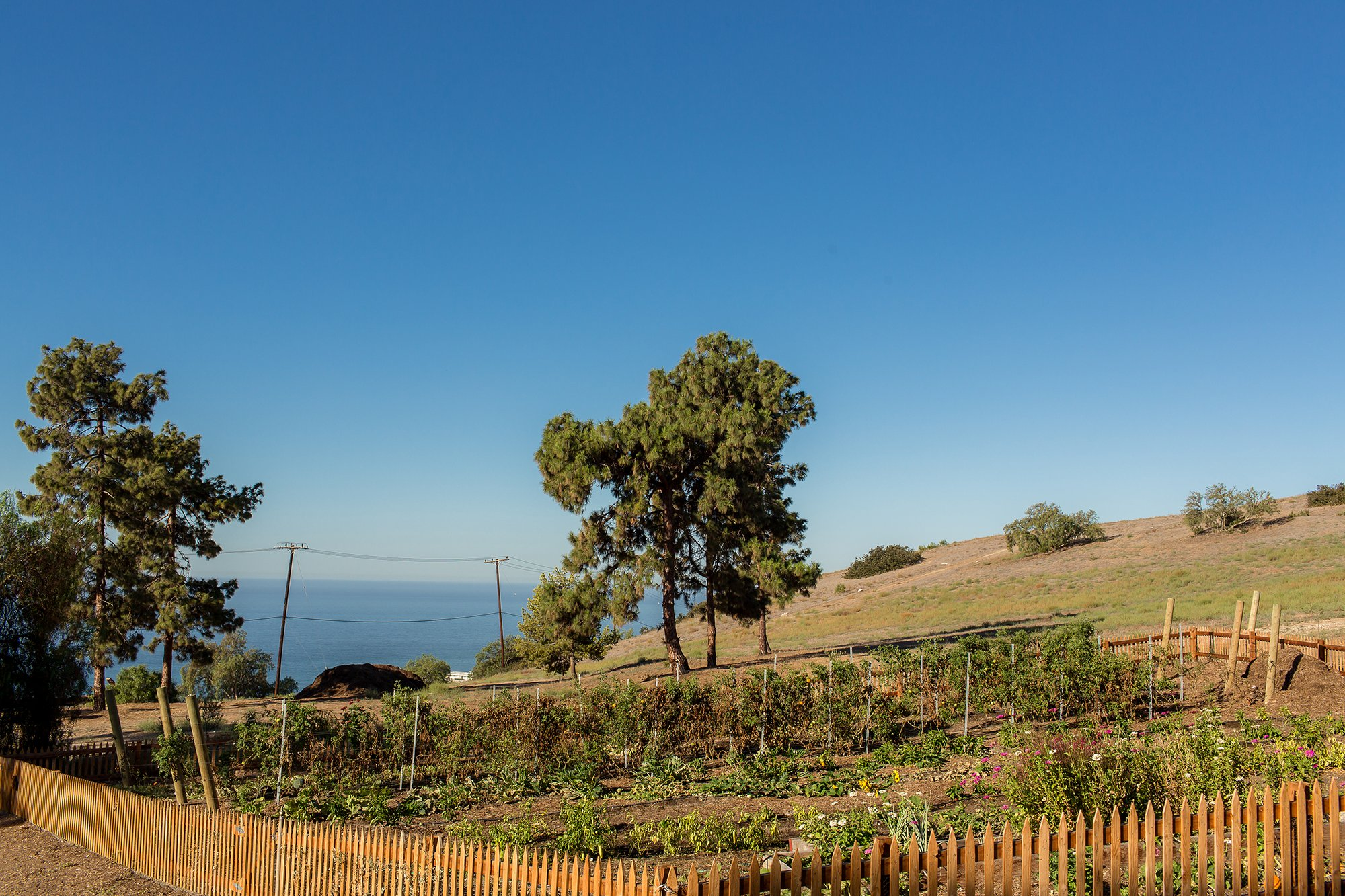 The Catalina View Gardens at Terranea are lined with chicken wire above and below ground to keep gophers away.