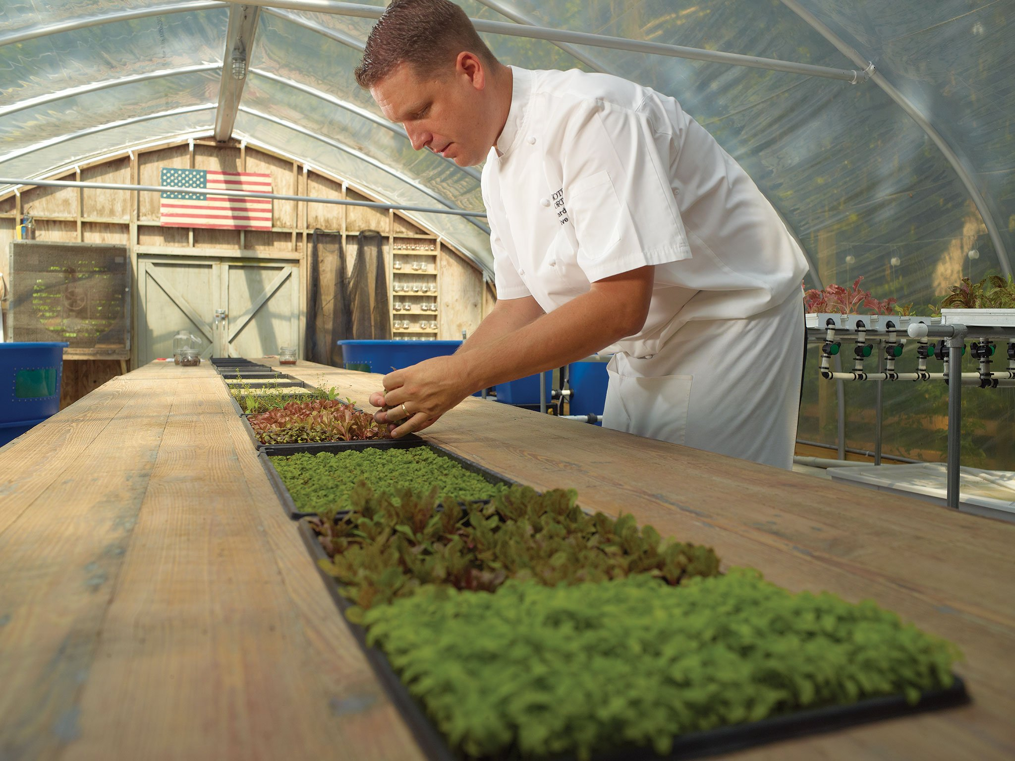 Executive chef Daven Wardynski inside the greenhouse at the Omni Amelia Island's Sprouting Project.