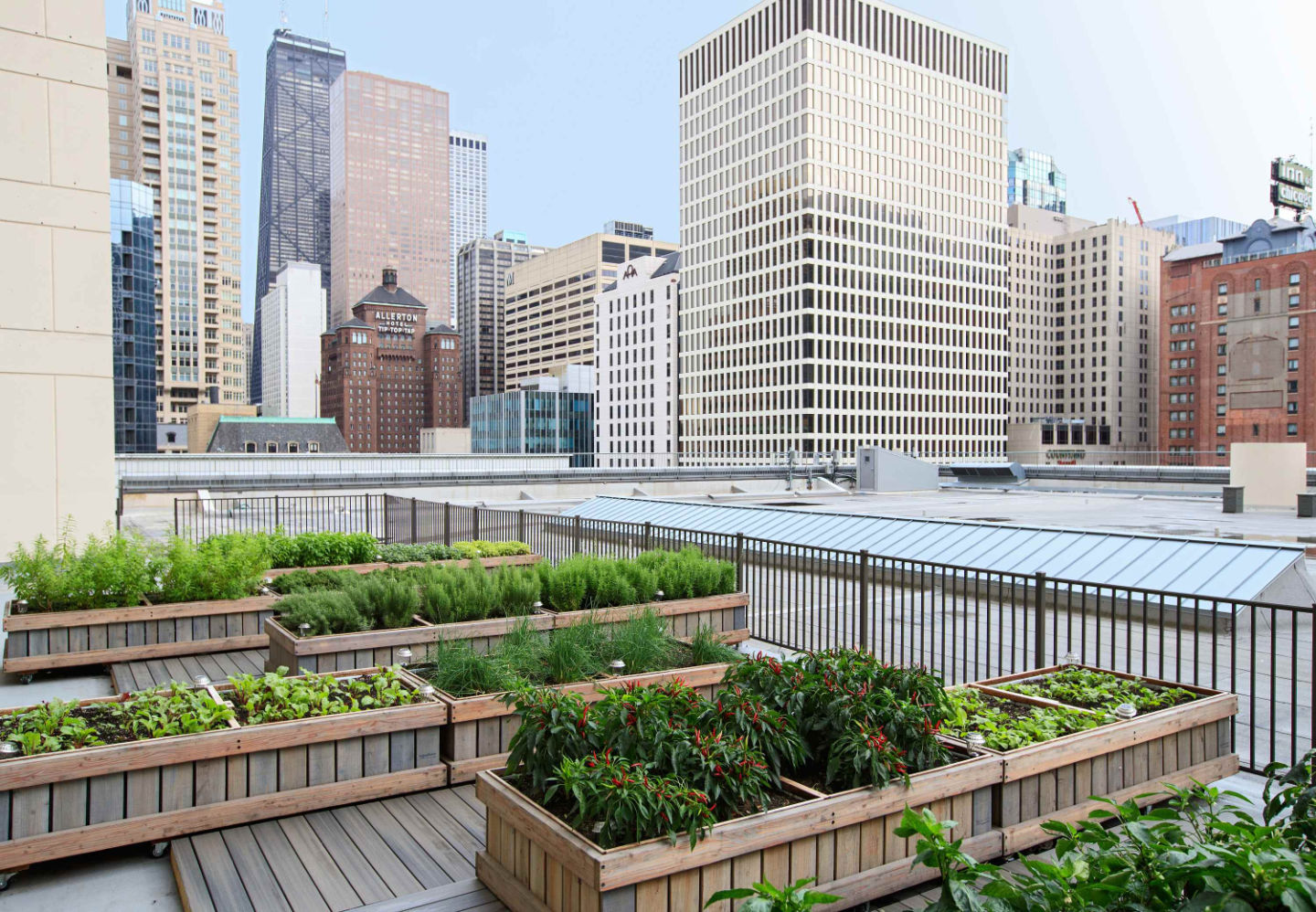 The hotel's rooftop garden includes beehives
