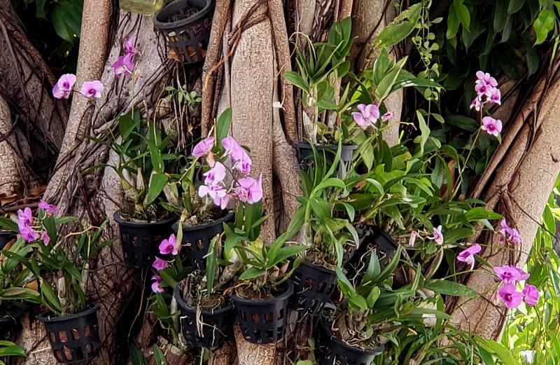 Beautiful orchids at Wat Pho
