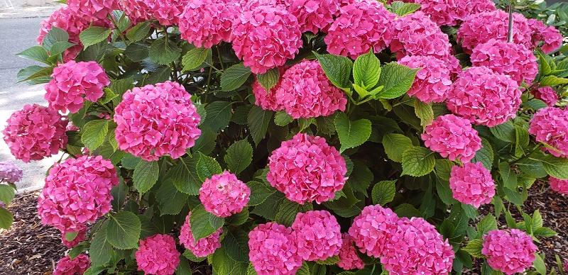 Flowers in Mondsee, Austrian Lake District