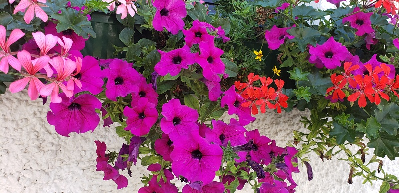 Flowers in Mondsee