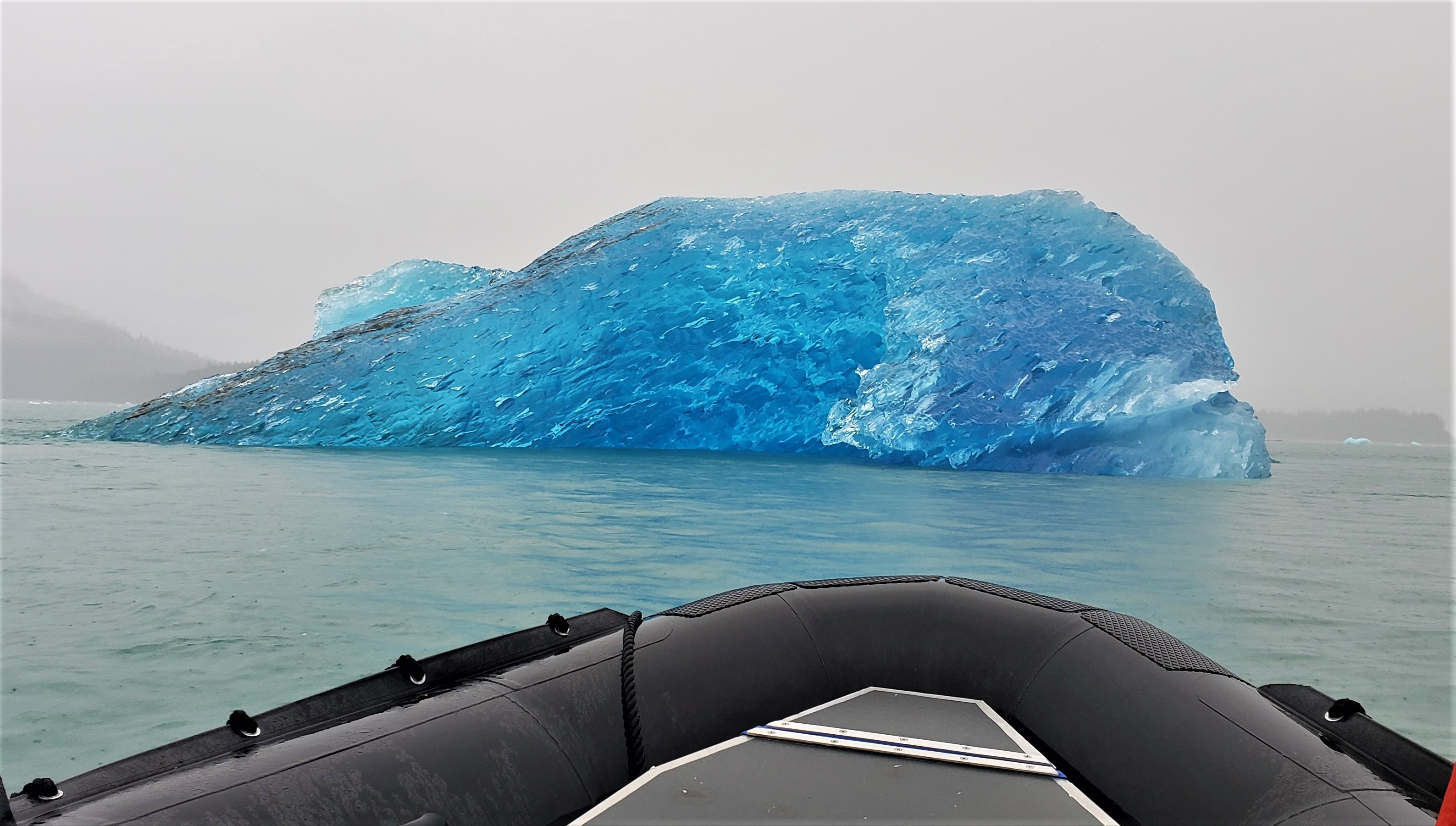 Blue glacial iceberg (shaped as a blue whale); it broke off from Le Conte Glacier. Photo by Susan J. Young