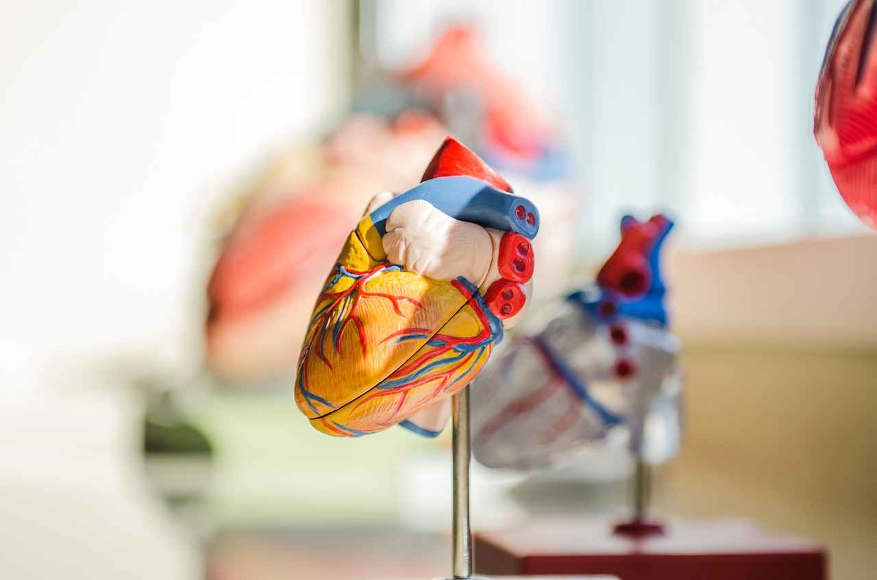 Repairing heart damage by transiently turning back the clock