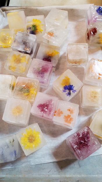 Edible flower ice cubes for Bubbles in the Garden - Infused ice cubes