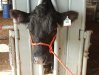 Identify and track cows more easily