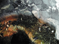 Figure 3. SensiNet Node 4 is hidden behind a simulated rock 3 ft. above the exhibit floor