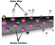 """Figure 4. A new way to attach molecules to the surfaces of carbon nanotubes entails a """"supercritical fluid"""" (not shown) with both gas- and liquid-like properties to load specially designed """"anchor molecules"""" onto the nanotubes without compromising tube strength and sensitivity; the active sites are indicated here binding to a targeted chemical (yellow)"""