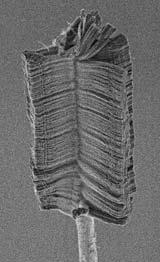 Nanobrush