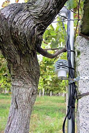 Fig. 8: Old vines and new technology existing side by side.
