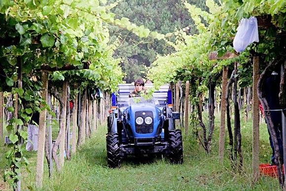 Fig. 9: Rias Baixas Vineyard