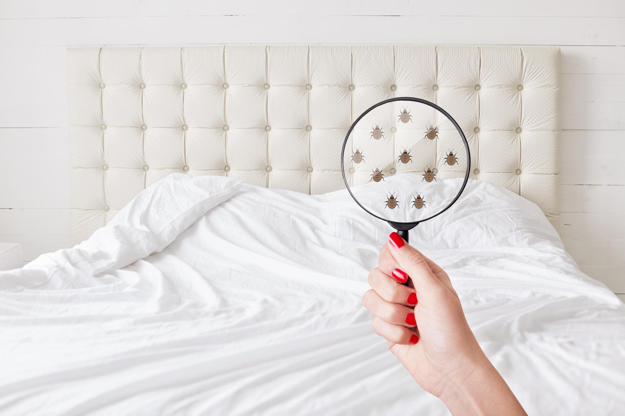 4 Tips For Bed Bug Prevention In Hotels Hotel Management