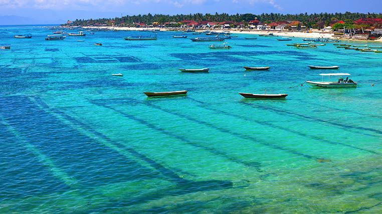 AdobeStock_seaweed-slideshow.jpg