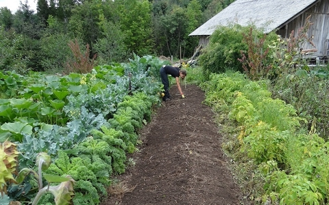 A woman crouches in a garden to plant a vegetable
