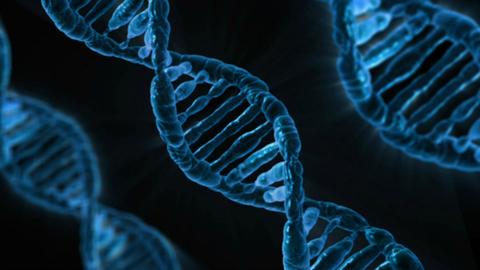 A column of DNA