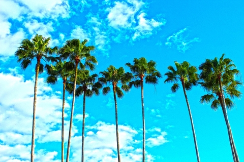Palm trees set against blue sky