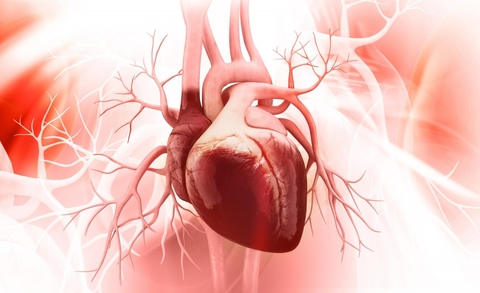 Signaling protein could be the target that stops heart failure in ...