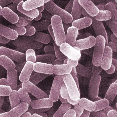 Gut bacteria 1