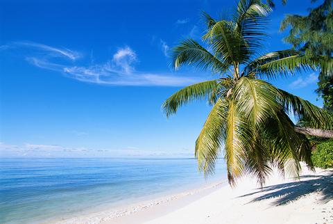 Palm Tree (Edit Only) David-De-Lossy-DigitalVision
