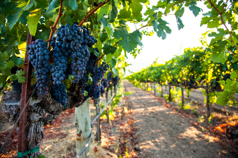 Napa Valley grapes -  bmdesign/iStock/Getty Images Plus/Getty Images