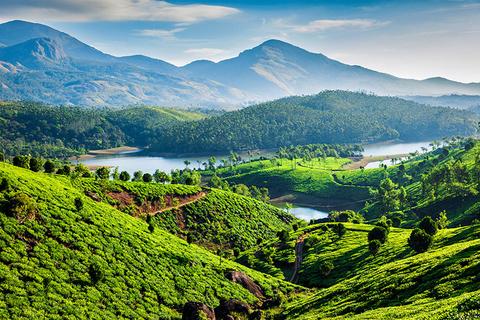Tea plantations in Kerala India