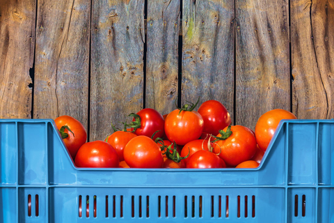 Red tomatoes in blue crate