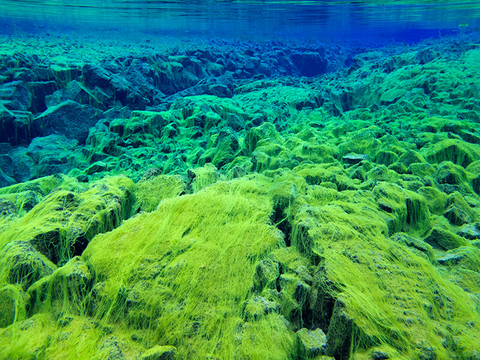 Underwater view of the continental split at Silfra in Iceland