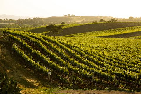 A California winery