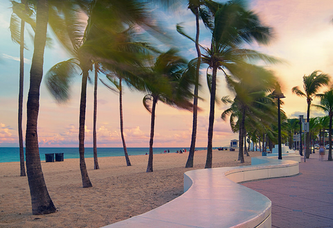 Palm trees in the wind on the beach