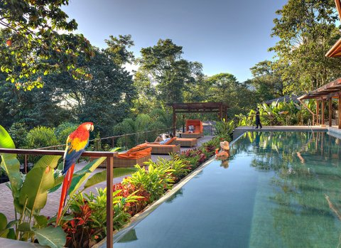 Pool view of Nayara Resorts, with a colorful macaw perched in the foreground.
