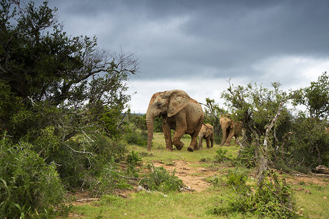 Elephants South Africa Safari - 04linz/iStock/Getty Images Plus/Getty Images