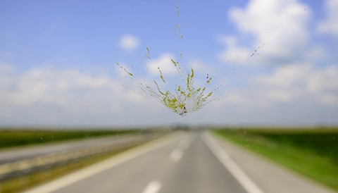 Bug on a windshield