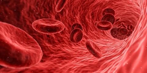 「Inside of vascular」の画像検索結果