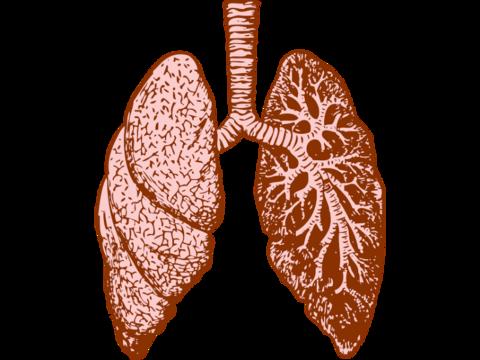 Verona tanks after COPD drug misses phase 2 endpoint | FierceBiotech