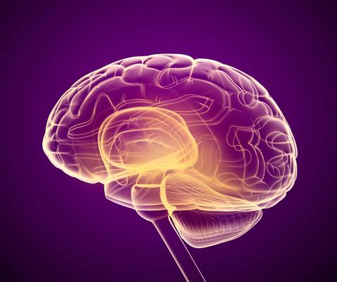 3D反对紫色背景的脑子