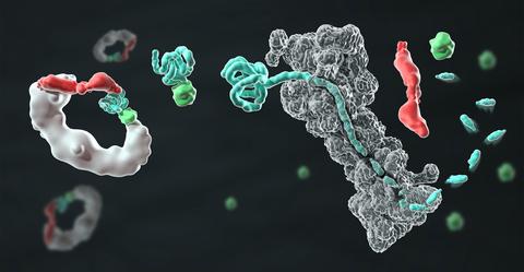 illustration of protein degradation