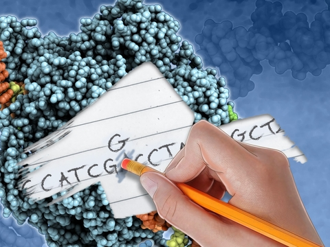 illustration of a hand erasing a nucleotide base letter and writing in a new one