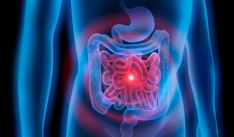 Stomach with colon