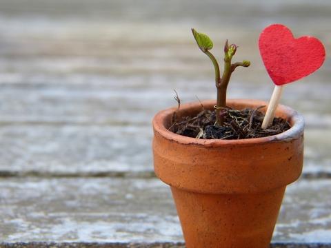 heart seed