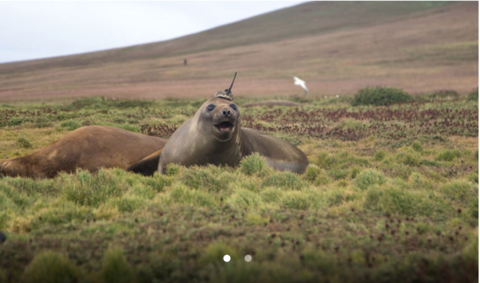 Tagged seals help scientists understand Antarctic currents