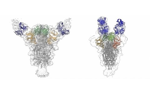 neutralizing antibodies