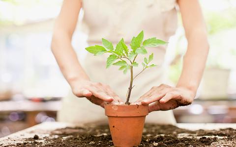 plant stem cell skincare