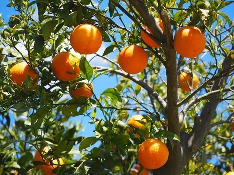 Orange Business Services shuffles leadership team