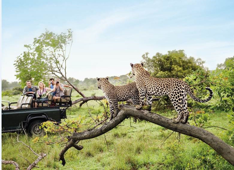 Image of group of people witnessing wildlife