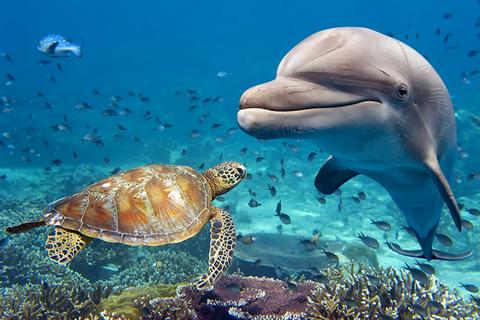 Dolphin Indonesia
